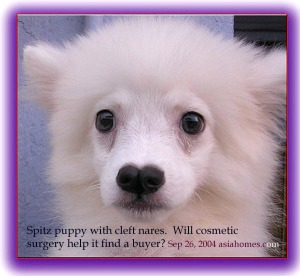 Spitz with cleft nares. Toa Payoh Vets
