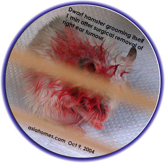 031208ASingapore veterinary dog cat rabbits hamster