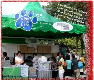 Finding a home for Singapore stray cats at a Pet Adoption Drive in Bishan Park II.
