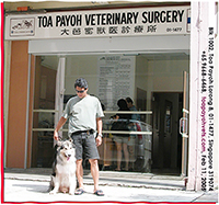 Toa Payoh Vets in Feb 11 2005, 3rd day Chinese New Year. Alaskan Malamute