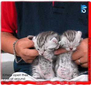 Pets' Station Frankel is the only sole cat pet shop in Singapore. Asiahomes.com