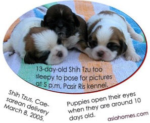 13-day-old puppies sleep a lot.  Eyes opened.  Toa Payoh Vets