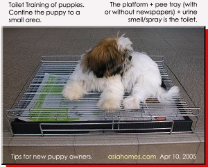 Platform + pee tray method of toilet training of puppies. Toa Payoh Vets