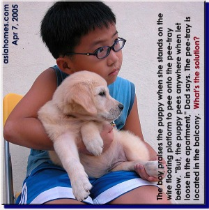 The boy who loves his Golden Retriever. Asiahomes.com