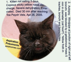 Force feeding must be done carefully esp. in cats. Aspiration Pneumonia and death. Toa Payoh Vets