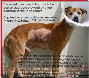 Stitches removed. Toa Payoh Vets. Owner was concerned about this old friend. Toa Payoh Vets.