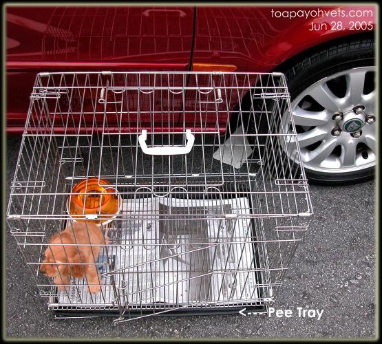 031209asingapore Puppy Toilet Training Condo Internet