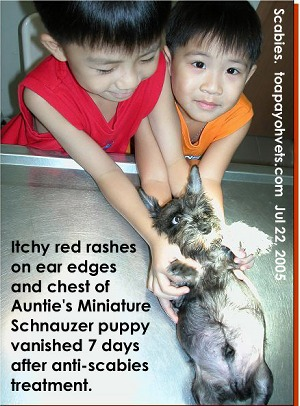 Itchiness can be due to scabies - mite infestation. Consult your vet early. Toa Payoh Vets.