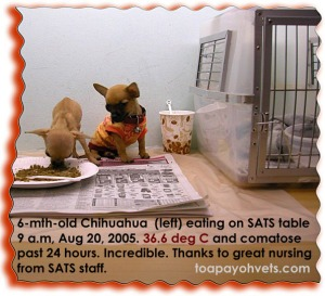 Fulling recovered due to great nursing from Lost and Found Left Baggage Dept Staff SATS, Singapore, Toa Payoh Vets