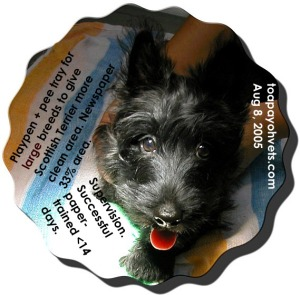 Scottish Terrier does not stay still for photography. Does not chew children's toys, only his. Toa Payoh Vets