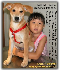 Leash method of toilet training of cross-breed female, adopted. Toa Payoh Vets