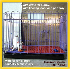 The wire crate, wire-flooring and pee tray for puppies. Rust is a problem. Toa Payoh Vets.