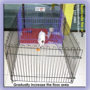 Don't let the puppy out to roam all over the apartment till it is paper-trained. Extend the floor area with barricades or baby gates. Toa Payoh Vets.