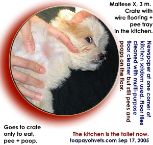 Toilet-training. Small area first 2 weeks. Toa Payoh Vets.