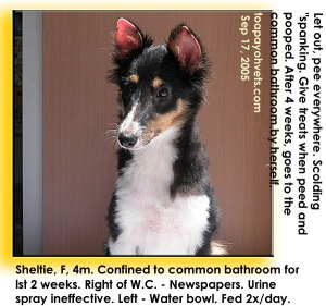 Play inside common bathroom for first 2 weeks. Toilet training. Sheltie. Toa Payoh Vets.