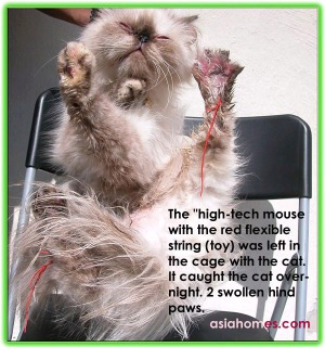 Never leave a mouse with flexible string inside a cage with a cat!  asiahomes.com